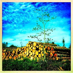 Not quite so well stacked (Julie (thanks for 9 million views)) Tags: 100xthe2019edition 100x2019 image61100 trees wood timber logs squareformat hipstamaticapp wexford ireland irish track woodland outdoor colourful htmt
