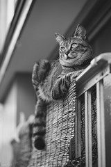 猫 (fumi*23) Tags: ilce7rm3 sony street sel85f18 a7r3 animal alley emount 85mm fe85mmf18 katze cat chat feline gato neko monochrome bw blackandwhite ねこ 猫 ソニー モノクロ 路地