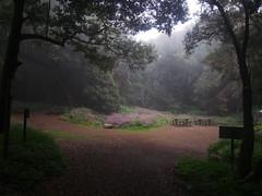 Garajonay, misty forest (Liendain) Tags: lagomera туман