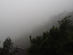 La Gomera, Garajonay (Liendain) Tags: lagomera туман