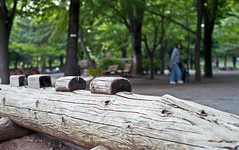 Alligator (odeleapple) Tags: pentax spotmatic sp smc takumar 50mm fujicolorc200 film park wooden alligator