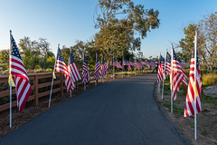 Field of Honor at Castaways Park on Memorial Day (SCSQ4) Tags: 10thannual 1776flags americanflags california castawayspark exchangeclubnewportharbor fieldofhonor holiday memorial memorialday newportbeach park usflags usaflags
