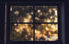 Different light, different season (Sarah Rausch) Tags: 50mm 18 sony niftyfifty windowwednesday window condensation foggy humid bokeh