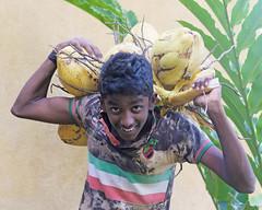 Coconut Boy (1X7A5013b) (Denish C) Tags: srilanka ceylon serendip beauty boy coconut face smile portrait happy tree worker
