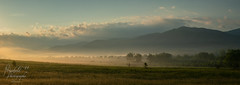 Sunrise in the Smokies (Michael Allen Siebold (Getty Images Contributor)) Tags: sky nature tree green light clouds landscape trees yellow shadows naturephotography countryside fog outside eos day sunrise