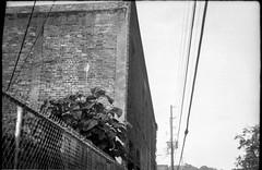 urban landscape, abandoned warehouse, powerlines, wire fence, Asheville, NC, FED 4, Industar 26, Derev Pan 200, HC-110 developer, 5.19.19 (steve aimone) Tags: urbandecay urbanlandscape warehouse powerlines metalfence vegetation riverdistrict asheville northcarolina fed4 derevpan200 hc110developer blackandwhite monochrome monochromatic architecture 35mm 35mmfilm film rangefinder