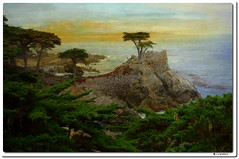 The Iconic Lone Cypress Tree (our cultural archive) Tags: lonecypresstree mostphotoghraphedtree painterytexture 17miledrive scenicdriveincalifornia nature tree pacificcoast