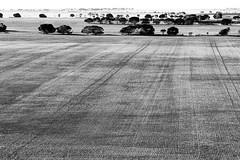 Farmland, Fields and Farmlines, Yorke Peninsula, South Australia (Red Nomad OZ) Tags: yorkepeninsula southaustralia australia outdoor outside landscape line rural country countryside field monochrome