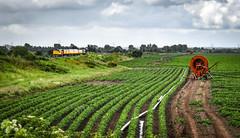 37521 passing Wichnor Junction (robmcrorie) Tags: 37251 1z97 derby cardiff test train colas class 37 wichnor junction wychnor potato field irrigation nikon d850