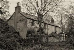 Ivy Farm House, Tongwynlais November 1997. (garethdavies486) Tags: ivy farm house tongwynlais canon f1n fd 50mm14 ilford fp4 kodak d23