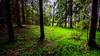 Niinisaari, East-Helsinki 🌴🌴 (Esa Suomaa) Tags: helsinki suomi finland green forest oldforest trees saveourtrees path trial darkforest spring summer europe tree olympusomd