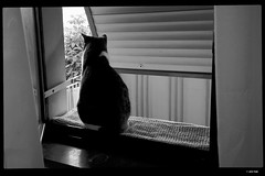 IMG_20190523_203830 (anto-logic) Tags: gatto occhi animali amicianimali amici cuccioli belli bellissimi amore dolci primopiano dof profonditàdicampo bw bn biancoenero blackandwhite felini libero libertà ritratto stupendo gorgeous nice pets pretty cute lovely cat eyes animals animalfriends friends puppies beautiful love sweet foreground depthoffield feline free freedom portrait carezza mano hand caress naturallight skin lighting crop charming puntodivista pov bokeh focus pointofview postproduzione postproduction lightroom filtro filter effetti effects photoshop alienskin leica huawei p20pro