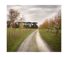 The long road in (jen 3163 (mostly off for a few weeks)) Tags: driveway farm trees road autumn fall seasons