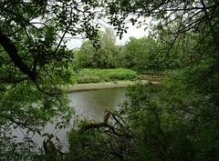 Snipe Island tongue (Phil Gayton) Tags: uk tree water tongue river meadow devon dart hems totnes undergrowth