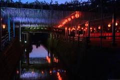 20190418_f25 : 藤ライトアップ (G-TAKI) Tags: japan fukuoka 日本 福岡 yanagawa 柳川 flower wisteria garden 藤 フジ river night nightview