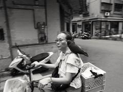 untitled (eeaann) Tags: bird cyclist blur blackandwhite ricohgrd1 partnership street taipei taiwan