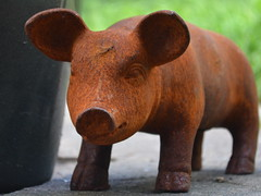 That'll do, pig. That'll do. (mitchell_dawn) Tags: pig castiron rust piglet gardenornament babe