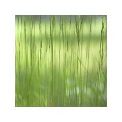 NG XLV ([ Time - Beacon ]) Tags: grass grasses closeup nature tb plant plants green greens sof