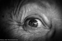 _DSC8353L (Pascal Rey Photographies) Tags: jr jrproject insideout globalartproject médiathèque médiathèquedescollines saintvallier drôme drômedescollines valléedurhône rhônealpes rhônevalley auvergnerhônealpes arturbain artcontemporain artgraphique art yeux ojos eyes fingers doigts bouche mouth langue tongue posters affiches visagespiétons visages faces pascalrey nikon d700 luminar3 skylum photographiecontemporaine photos photographie photography photograffik photographienumérique photographiedigitale photographieurbaine pascalreyphotographies