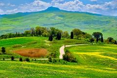 panorama (lotti roberto) Tags: valdorcia toscana tuscany pienza italy italia landscape green trees tree alberi path stada