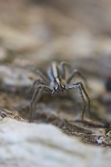 Araignée (LiliFlora11) Tags: araignée macro aracnide nature
