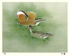 Mandarin duck (Japanese Flower and Bird Art) Tags: bird mandarin art japan modern print japanese duck atsushi aix lithograph galericulata anatidae uemura
