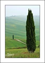 I solitari (7) (Jambo Jambo) Tags: panorama landscape campagna countryside sanquiricodorcia pienza montalcino valdorcia siena toscana tuscany italia italy sonydscrx10m4 jambojambo cypress cipressi torrenieri