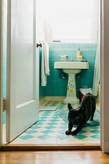 downward dog in shower mist (Duke of Gnarlington) Tags: french bulldog dog rico downward puppy shower bathroom morning light sony rx1rm2 rx1r zeiss 35mm