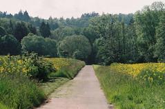 Wiesen-Wald-Wanderung (alf sigaro) Tags: voigtländervsl1 voigtländer vsl1 slr voigtländercolordynarex4135 colordynarex4135 rollei carlzeiss carlzeissteletessar4135 m42 wald