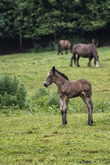 Potrillo (Guillermo Relaño) Tags: guillermorelaño sony a7 alpha alfa ilce a7m3 cantabría españa spain liérganes caballo potro potrillo hourse