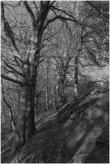 image (garethdavies486) Tags: canon f1n cmon fd 35mm2 ilford 100 delta kodak d23 long woods diy film scanning development
