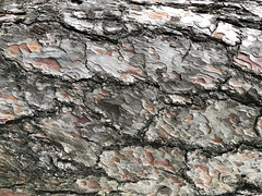 nature as art work (Rosmarie Voegtli) Tags: pattern bark grey hochwald muster rinde tree baum albero arbre hiking forest wood