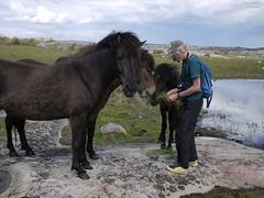 Horses horses! (Päivi ♪♫) Tags: sweden bohuslän kayak holiday paddling island summer june horse