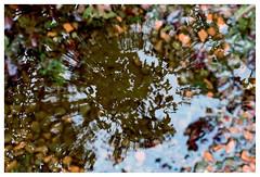 Dreich - Reflection (wwshack) Tags: dreich gairneybank hatchbankroad kinross scotland reflection