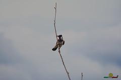 A-LUR_7383 (OrNeSsInA) Tags: aly passignano panicale natura panorami campagma campagna landescape trasimeno nikon canon airone airon cormorano spettacolo birdwatching albero cielo animale mare acqua uccello