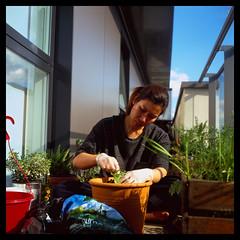 Balcony Gardening (Jamie Langford) Tags: rolleiflex velvia50 120film balcony