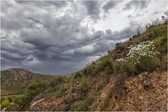 Flores en la ladera (Fernando Forniés Gracia) Tags: españa aragón zaragoza flores nubes paisaje landscape naturaleza