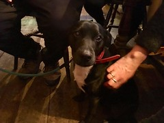 This pub dog is gettin' good scritches.