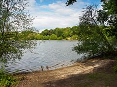 Heath Pond Petersfield-F5280472 (tony.rummery) Tags: beach ducks em5mkii heathpond lake landscape mft microfourthirds omd olympus petersfield pond england unitedkingdom
