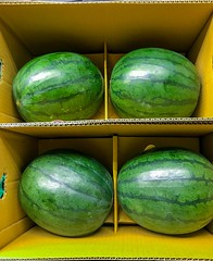 Four watermelons in a cardboard box (DigiPub) Tags: 1152405717 yokohama watermelons cardboardbox 西瓜 スイカ すいか
