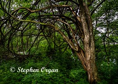 Woods in the spring (Stephen Organ Photography) Tags: knoxcounty nature