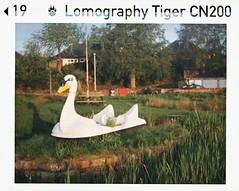 Plastic Cygnet19 (bigalid) Tags: halina supermini 110 plastic fixedfocus lomographytiger200cn may 2019