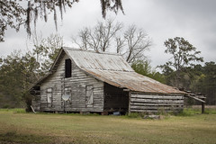 03.20.19 (itsbrandoyo) Tags: abandoned bluffplantation berkeleycounty spring lowcountry southcarolina sc springtime historic history liveoaktrees liveoak oaks plantation cottage lewisfield barn farm rurallife rural country southern jedburg