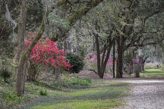 03.20.19 - Bluff Plantation (itsbrandoyo) Tags: abandoned bluffplantation berkeleycounty spring lowcountry southcarolina sc springtime historic history liveoaktrees liveoak oaks plantation cottage lewisfield barn farm rurallife rural country southern jedburg
