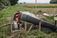 Pumping up (odeleapple) Tags: nikon d810 carl zeiss planar 50mm pump irrigation paddy rice field