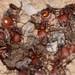 Harvester Ant Entrance