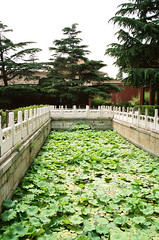 Imperial Ancestral Temple Green Water Leaves (Matthew Huntbach) Tags: green leaves beijing 太庙 water imperialancestraltemple kodakportra160