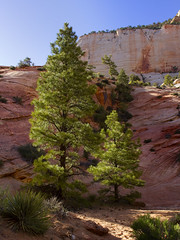 Zion National Park Utah: East side with slick rock (swissuki) Tags: zion national nature park landscape east side usa ut utah mountain