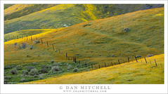 Wildflowers, Hills, And Fence (G Dan Mitchell) Tags: temblor range carizzo plain national monument hills wildflower bloom flowers nature grass green yellow orange meadow spring season landscape travel sanluisobispo county california usa north america