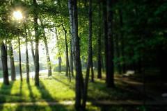 Morning (prokhorov.victor) Tags: утро природа солнце лес пейзаж деревья